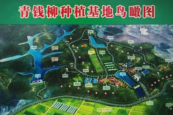 "<div style=""text-align:center;""> 湖南青钱柳科技有限公司 </div>"